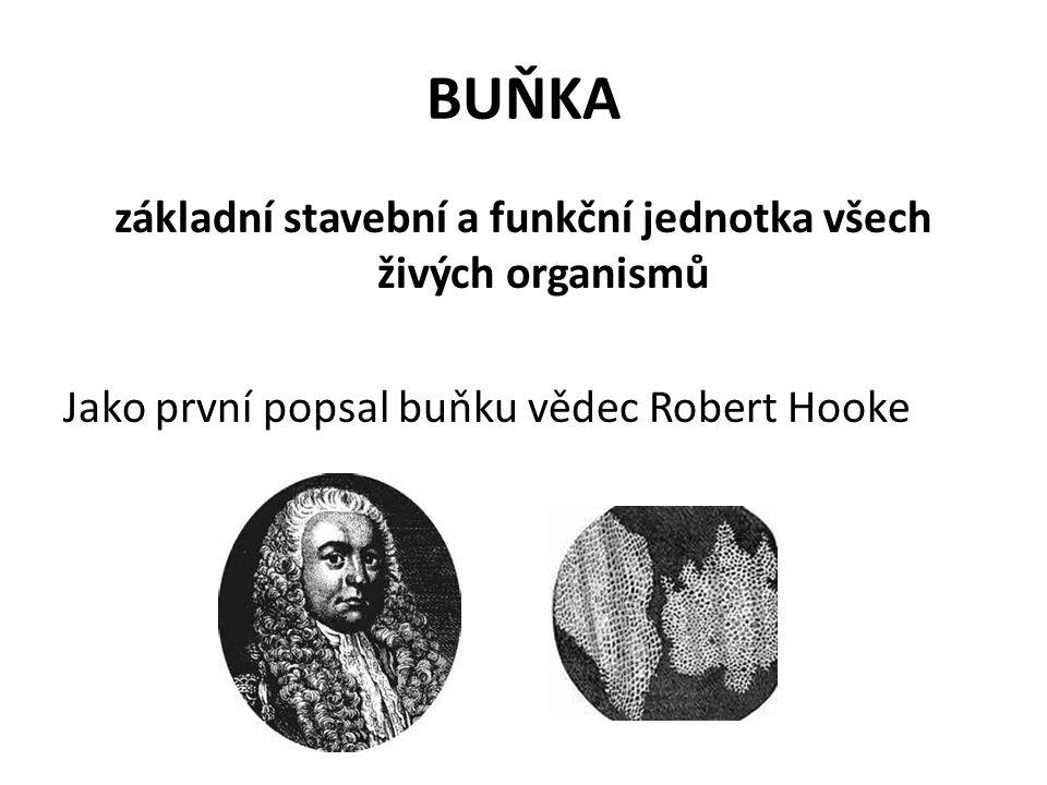 základní stavební a funkční jednotka všech živých organismů Jako první popsal buňku vědec Robert Hooke