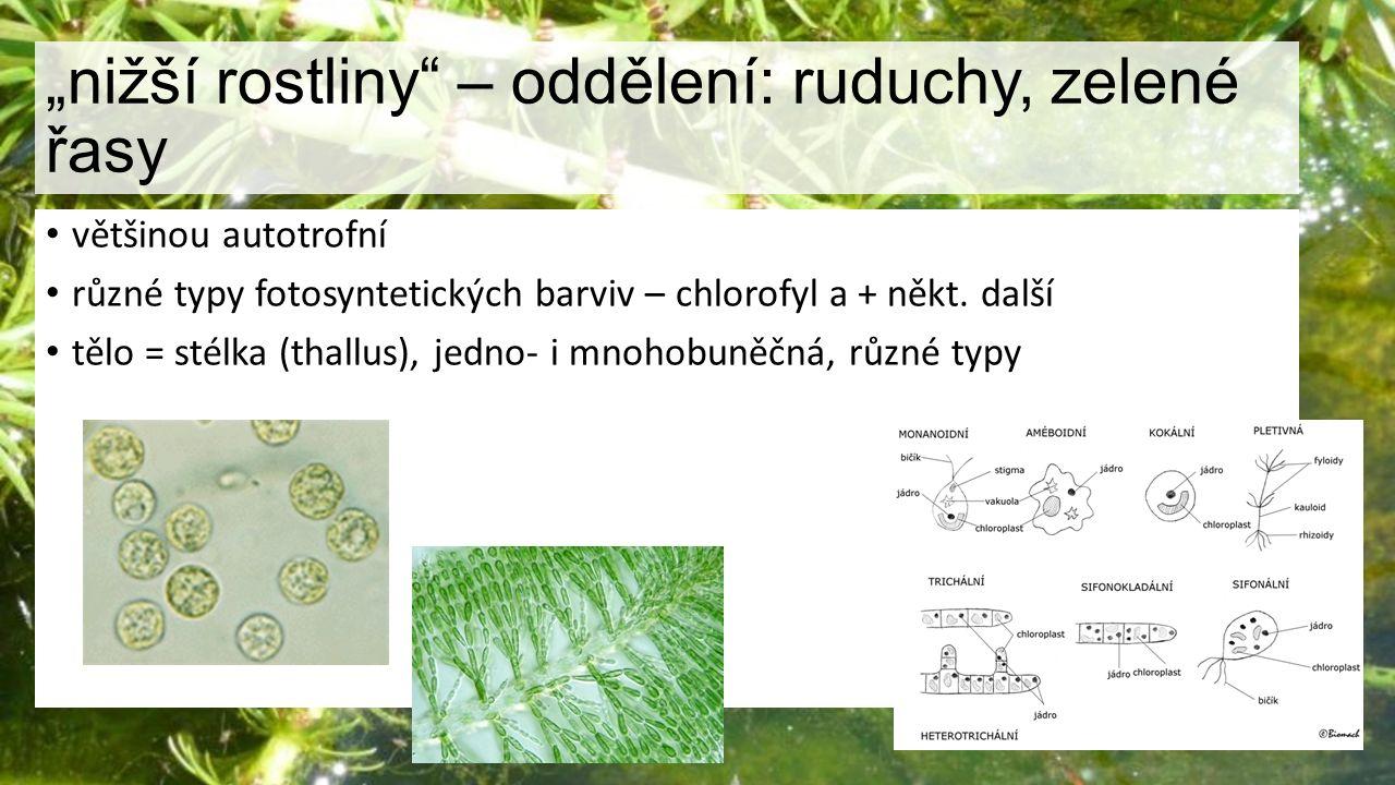 """""""nižší rostliny"""" – oddělení: ruduchy, zelené řasy většinou autotrofní různé typy fotosyntetických barviv – chlorofyl a + někt. další tělo = stélka (th"""