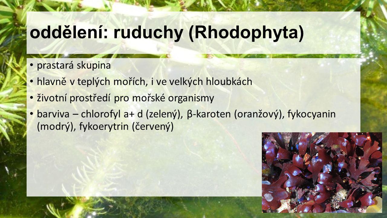 oddělení: ruduchy (Rhodophyta) prastará skupina hlavně v teplých mořích, i ve velkých hloubkách životní prostředí pro mořské organismy barviva – chlor