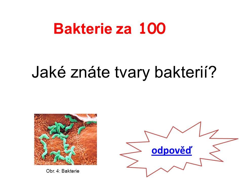 Bakterie za 100 Jaké znáte tvary bakterií odpověď Obr. 4: Bakterie