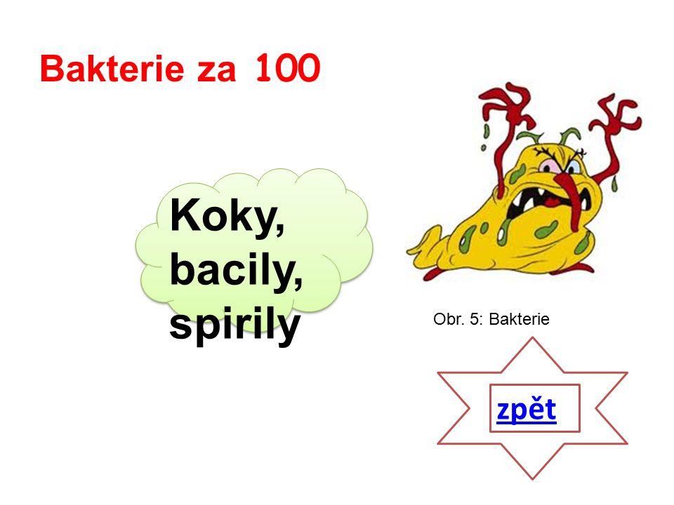 Koky, bacily, spirily zpět Bakterie za 100 Obr. 5: Bakterie