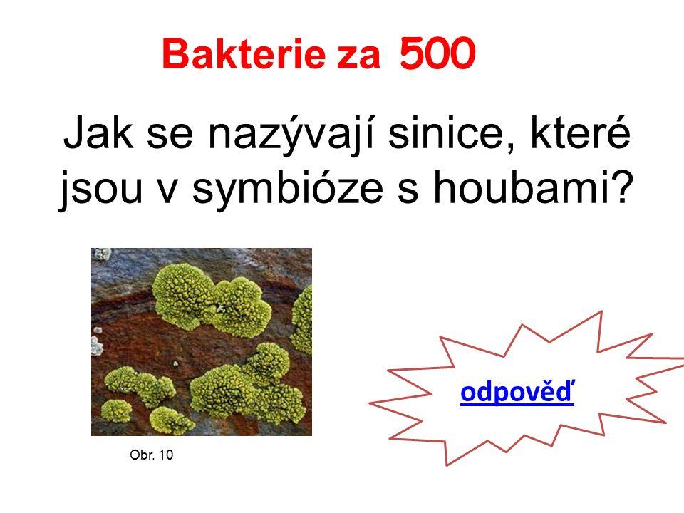 Bakterie za 500 Jak se nazývají sinice, které jsou v symbióze s houbami odpověď Obr. 10