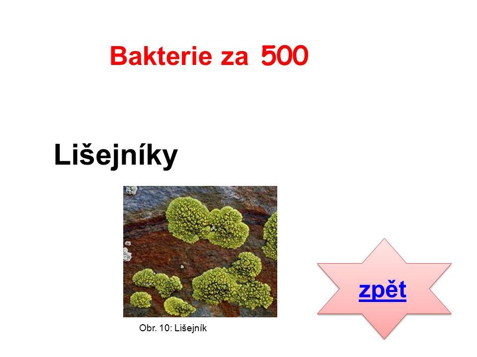 Lišejníky zpět Bakterie za 500 Obr. 10: Lišejník