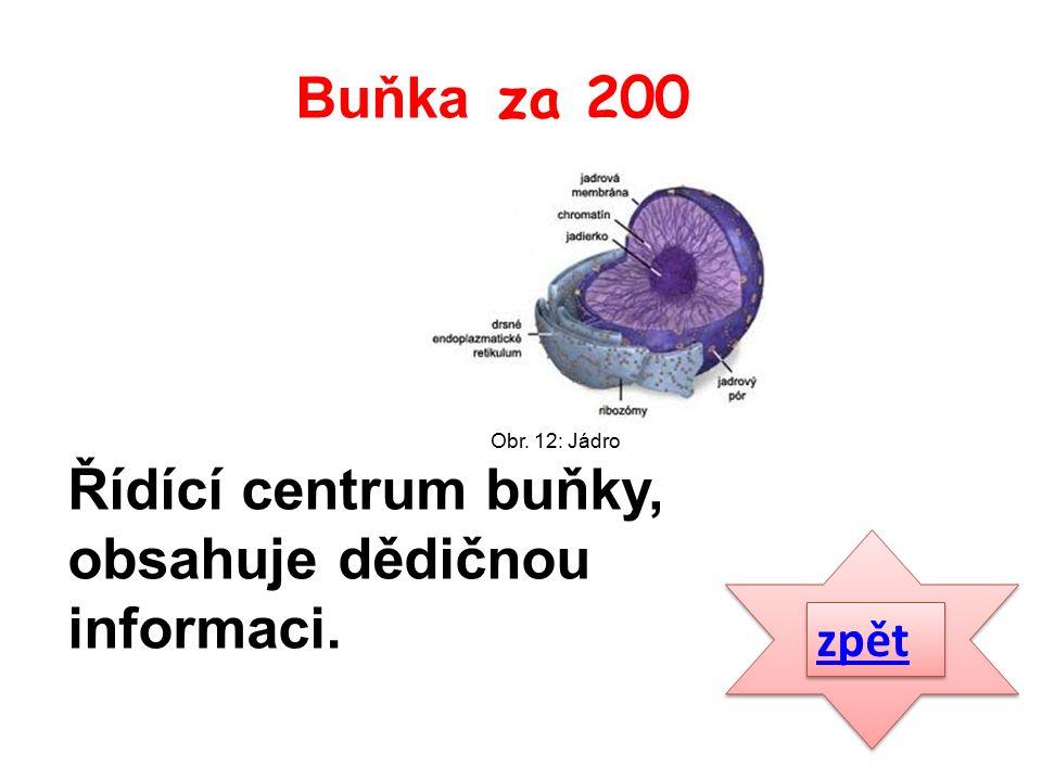 Řídící centrum buňky, obsahuje dědičnou informaci. zpět Buňka za 200 Obr. 12: Jádro