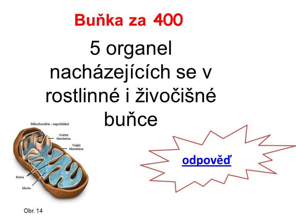 Buňka za 400 5 organel nacházejících se v rostlinné i živočišné buňce odpověď Obr. 14
