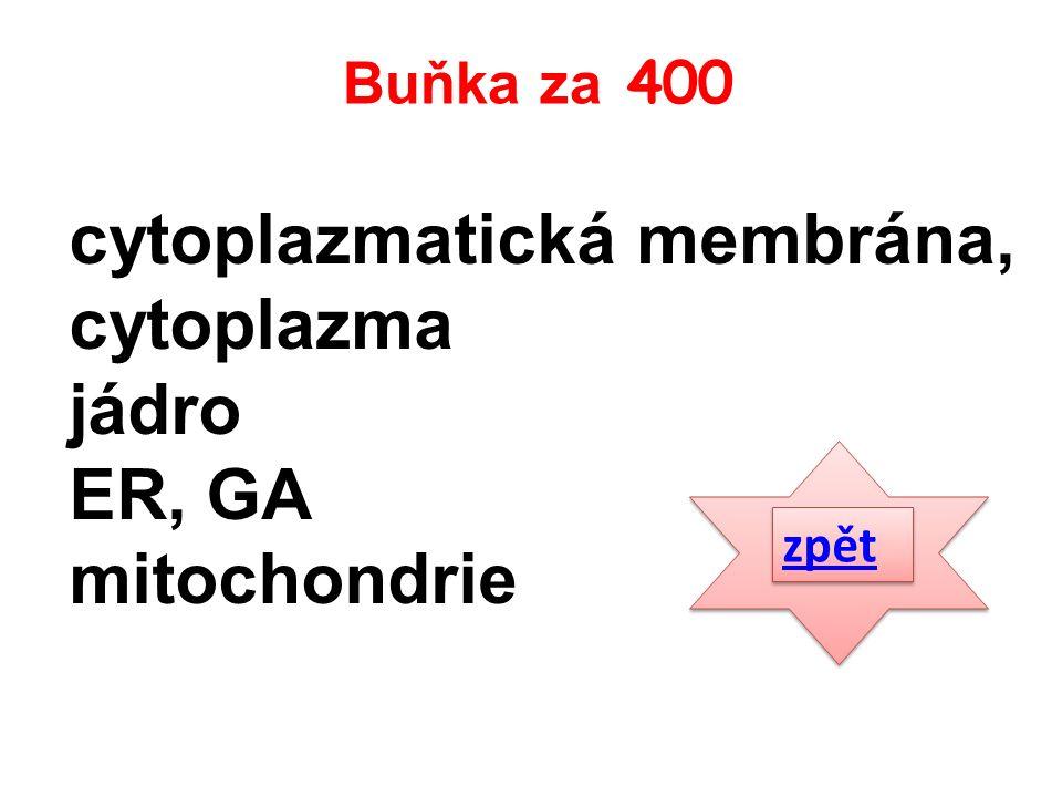 cytoplazmatická membrána, cytoplazma jádro ER, GA mitochondrie zpět Buňka za 400