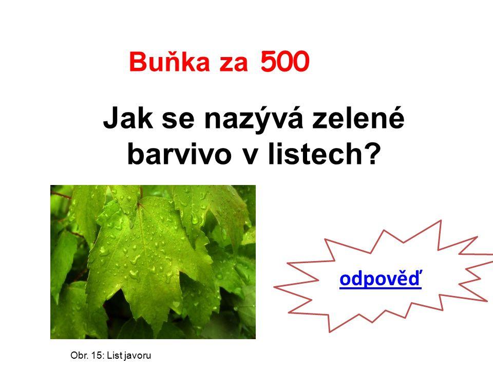 Buňka za 500 Jak se nazývá zelené barvivo v listech odpověď Obr. 15: List javoru