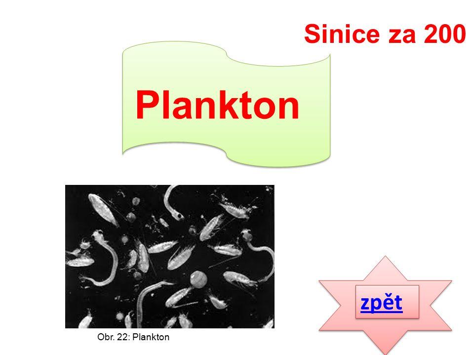 zpět Plankton Sinice za 200 Obr. 22: Plankton