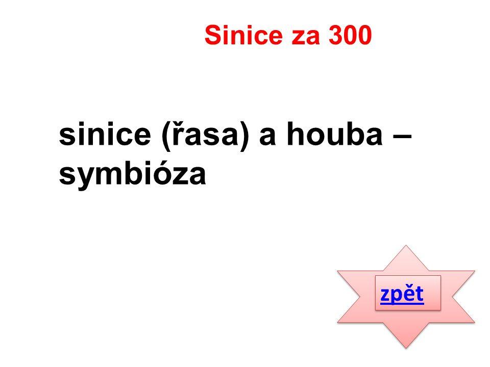 zpět sinice (řasa) a houba – symbióza Sinice za 300