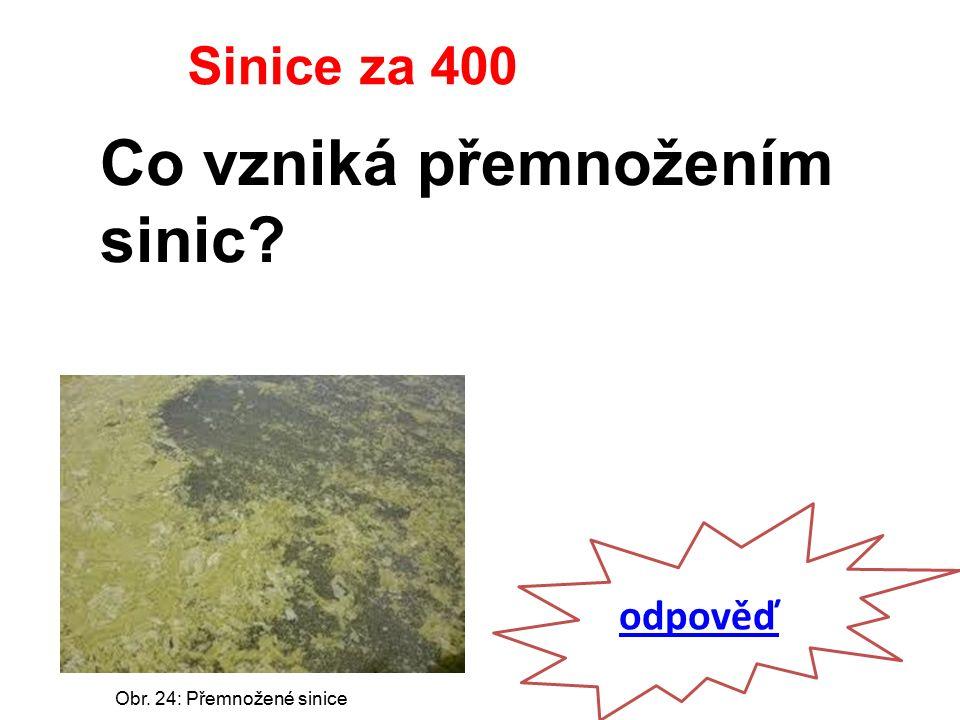 odpověď Sinice za 400 Co vzniká přemnožením sinic Obr. 24: Přemnožené sinice