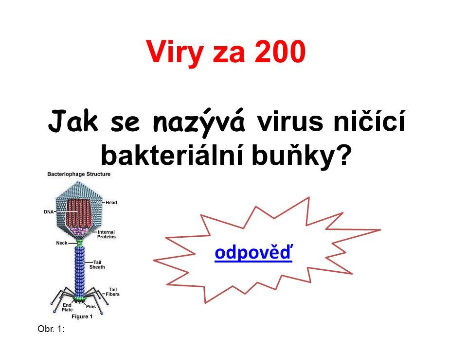 Viry za 200 Jak se nazývá virus ničící bakteriální buňky odpověď Obr. 1: