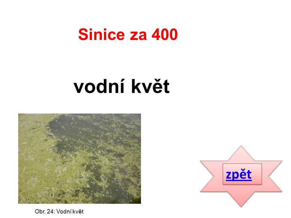 zpět vodní květ Sinice za 400 Obr. 24: Vodní květ