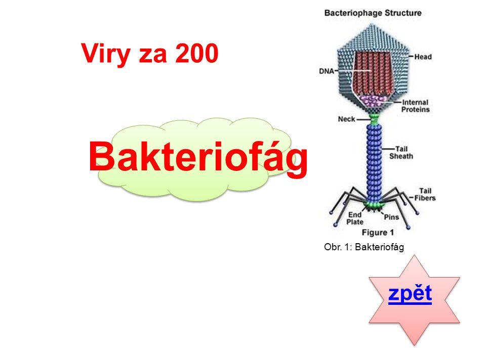 Bakterie za 300 Jaké znáte typy bakterií? odpověď
