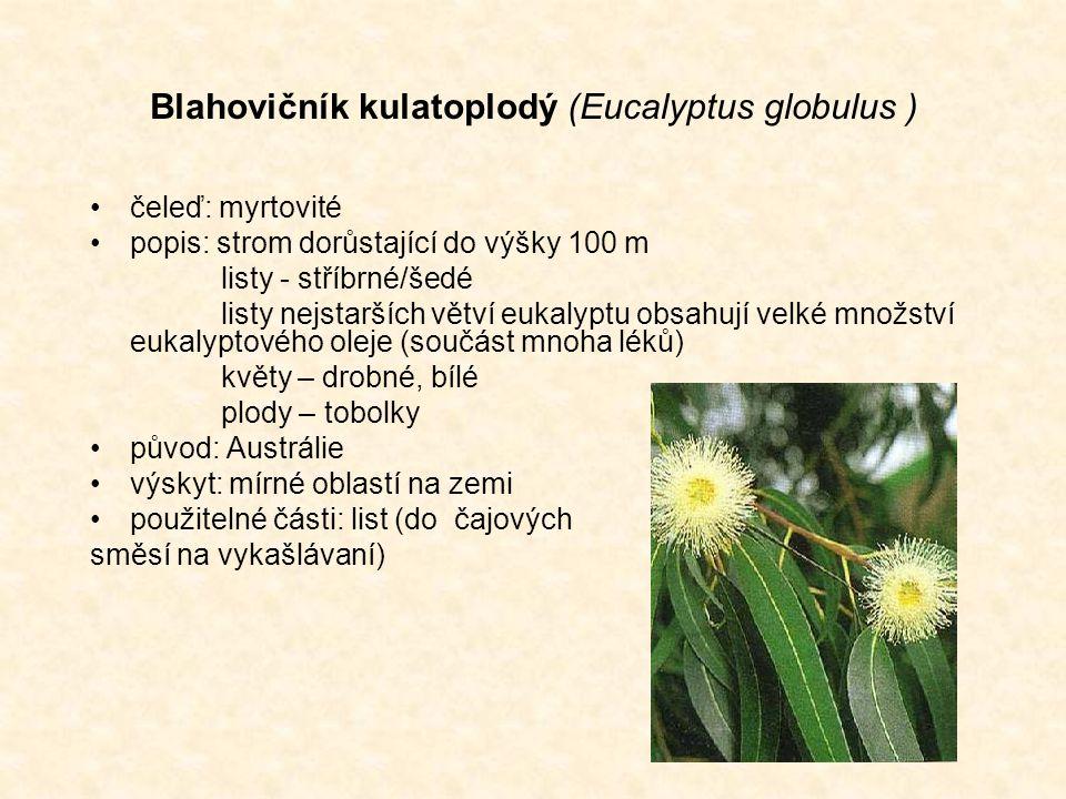 Blahovičník kulatoplodý (Eucalyptus globulus ) čeleď: myrtovité popis: strom dorůstající do výšky 100 m listy - stříbrné/šedé listy nejstarších větví eukalyptu obsahují velké množství eukalyptového oleje (součást mnoha léků) květy – drobné, bílé plody – tobolky původ: Austrálie výskyt: mírné oblastí na zemi použitelné části: list (do čajových směsí na vykašlávaní)