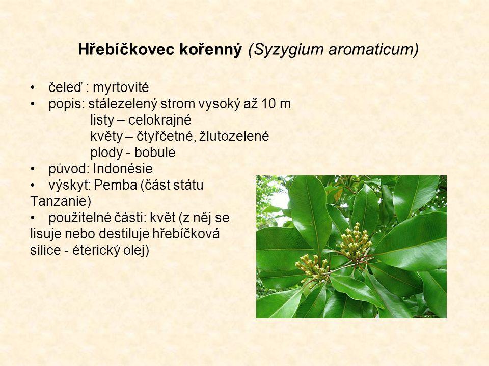 Hřebíčkovec kořenný (Syzygium aromaticum) čeleď : myrtovité popis: stálezelený strom vysoký až 10 m listy – celokrajné květy – čtyřčetné, žlutozelené plody - bobule původ: Indonésie výskyt: Pemba (část státu Tanzanie) použitelné části: květ (z něj se lisuje nebo destiluje hřebíčková silice - éterický olej)