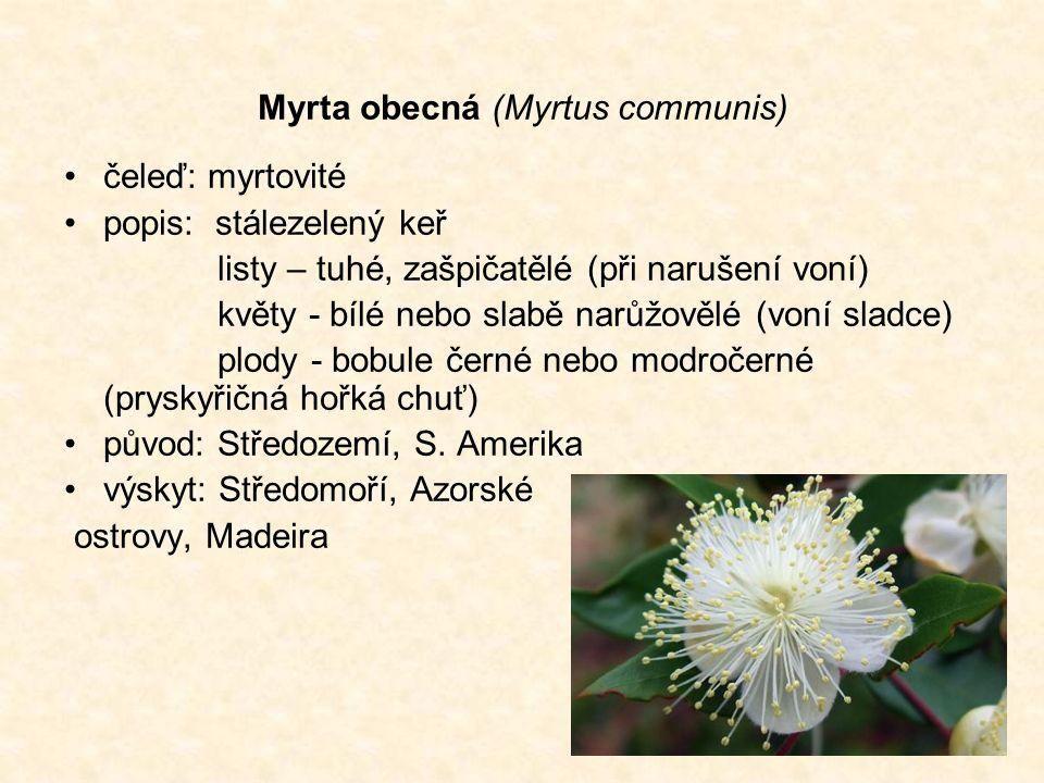Myrta obecná (Myrtus communis) čeleď: myrtovité popis: stálezelený keř listy – tuhé, zašpičatělé (při narušení voní) květy - bílé nebo slabě narůžovělé (voní sladce) plody - bobule černé nebo modročerné (pryskyřičná hořká chuť) původ: Středozemí, S.