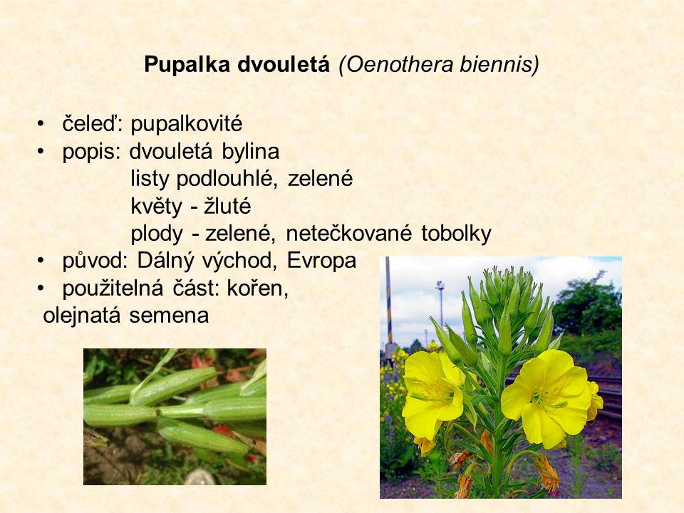 Pupalka dvouletá (Oenothera biennis) čeleď: pupalkovité popis: dvouletá bylina listy podlouhlé, zelené květy - žluté plody - zelené, netečkované tobolky původ: Dálný východ, Evropa použitelná část: kořen, olejnatá semena