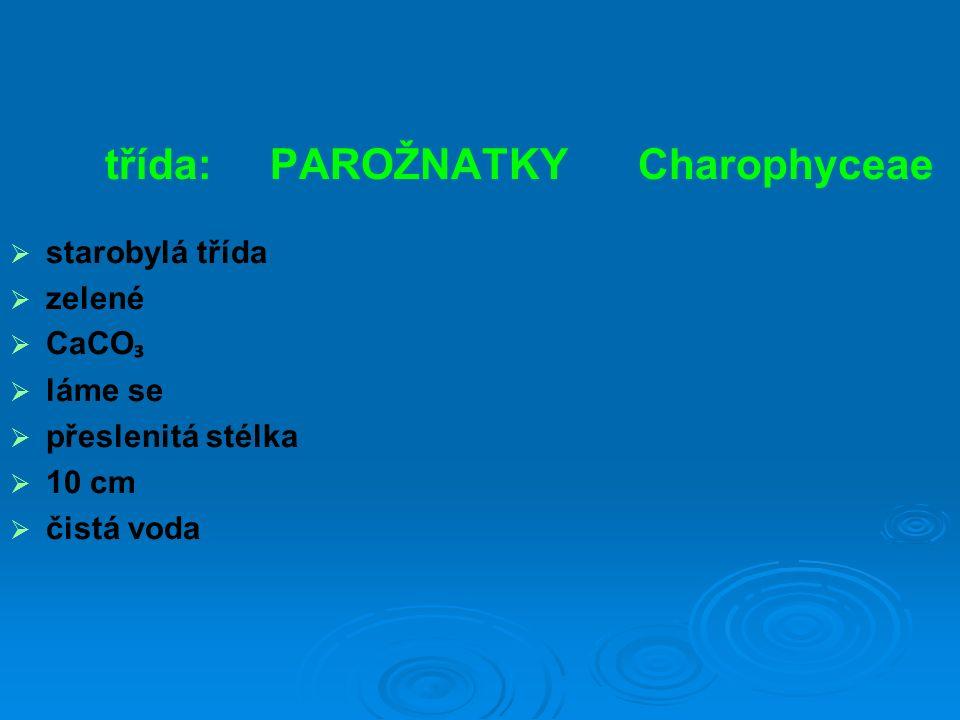 třída: PAROŽNATKY Charophyceae  starobylá třída  zelené  CaCO ₃  láme se  přeslenitá stélka  10 cm  čistá voda