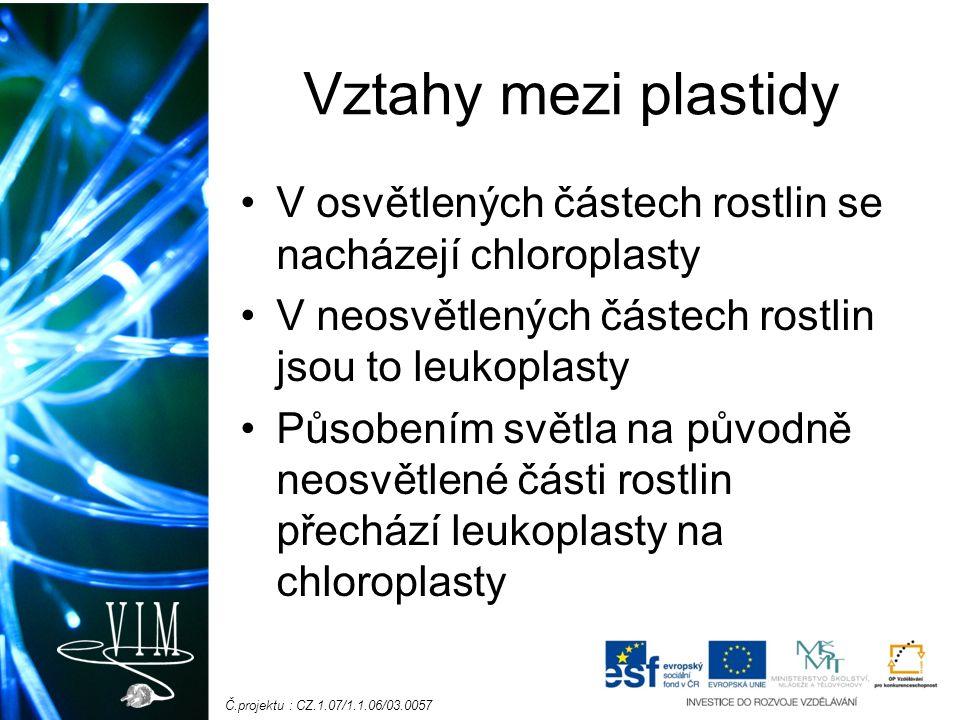 Č.projektu : CZ.1.07/1.1.06/03.0057 Vztahy mezi plastidy V osvětlených částech rostlin se nacházejí chloroplasty V neosvětlených částech rostlin jsou to leukoplasty Působením světla na původně neosvětlené části rostlin přechází leukoplasty na chloroplasty