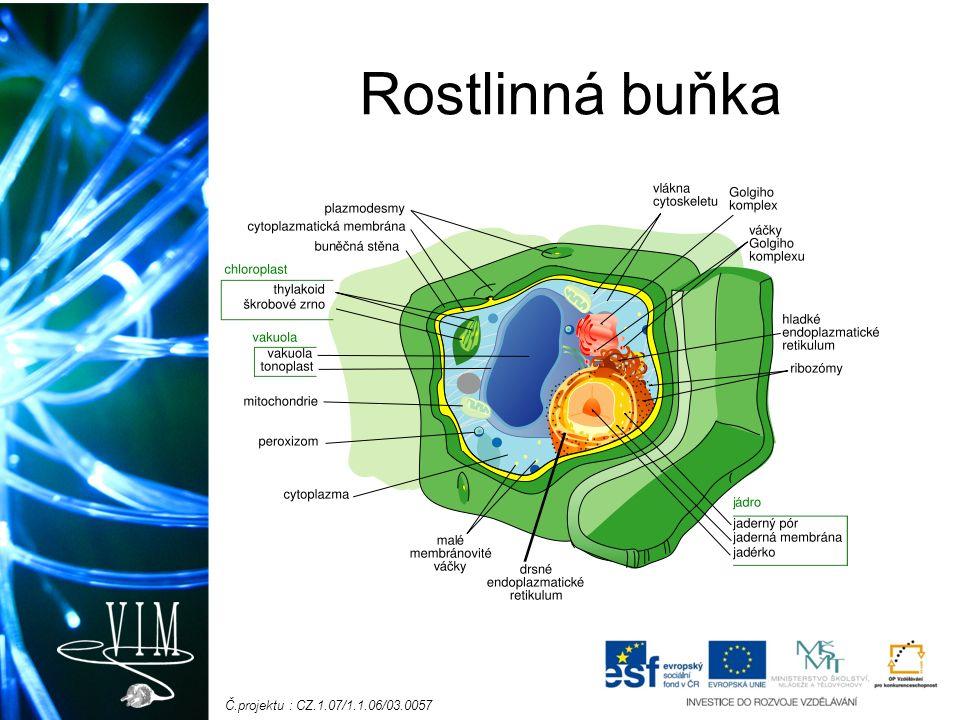 Č.projektu : CZ.1.07/1.1.06/03.0057 Rostlinná buňka