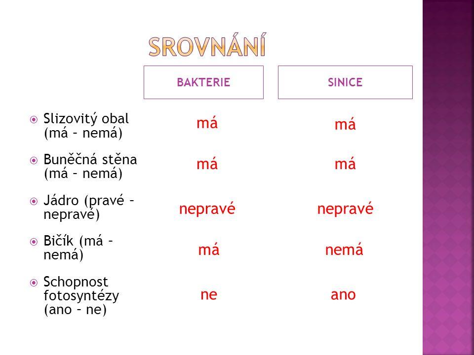 BAKTERIESINICE  Slizovitý obal (má – nemá)  Buněčná stěna (má – nemá)  Jádro (pravé – nepravé)  Bičík (má – nemá)  Schopnost fotosyntézy (ano – ne) nepravé má nepravé nemámá neano