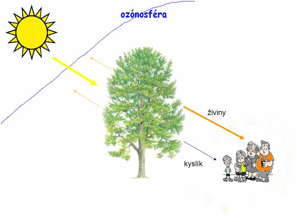 živiny kyslík