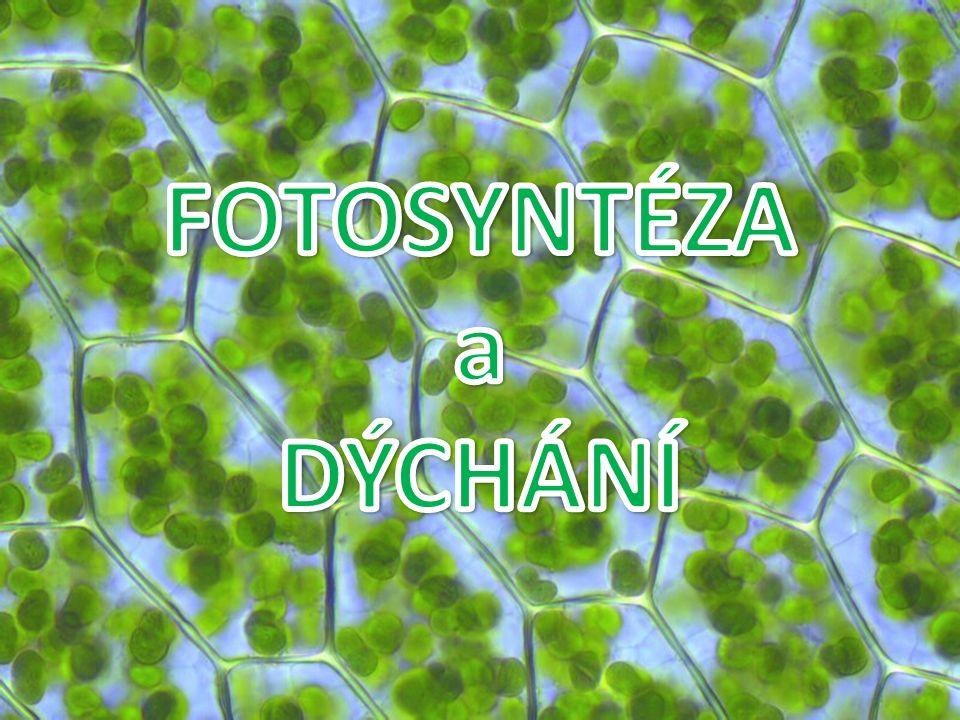Fotosyntéza základní proces zabezpečující život na Zemi téměř veškerá biomasa vzniká fotosyntézou je to jediný děj na Zemi, při kterém se kyslík uvolňuje jedná se o biochemický proces, při kterém se mění přijatá energie světelného záření na energii chemickou je to přeměna anorganických látek na látky organické