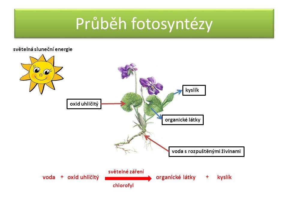 Podmínky fotosyntézy světelná energie chlorofyl – zeleň listová (zelené barvivo obsažené v chloroplastech) chloroplasty měříku příbuzného