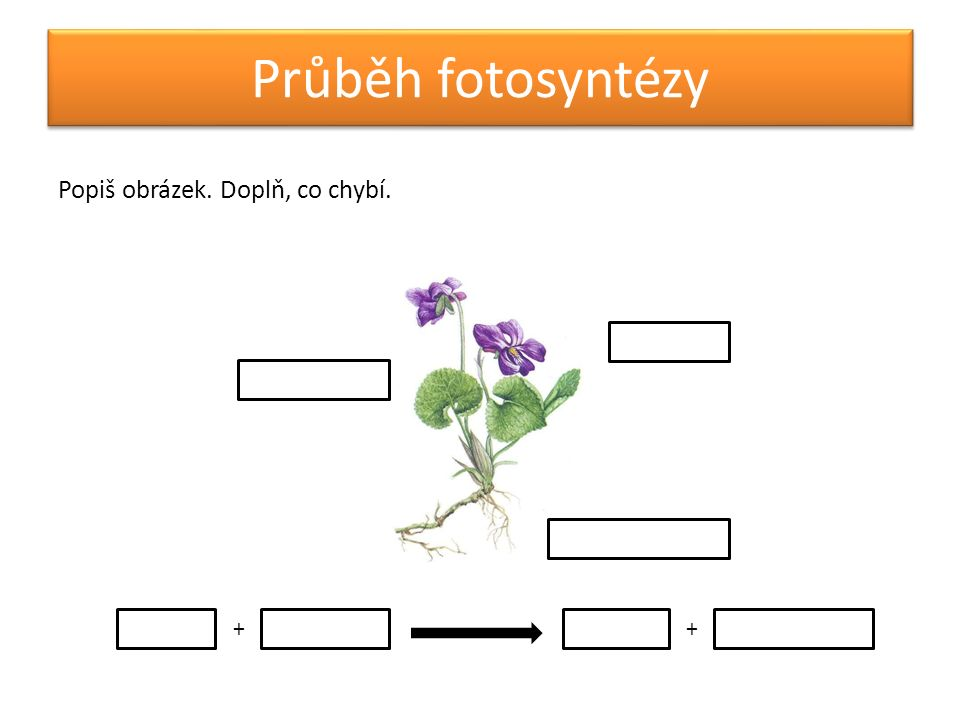 Průběh fotosyntézy Popiš obrázek. Doplň, co chybí. ++