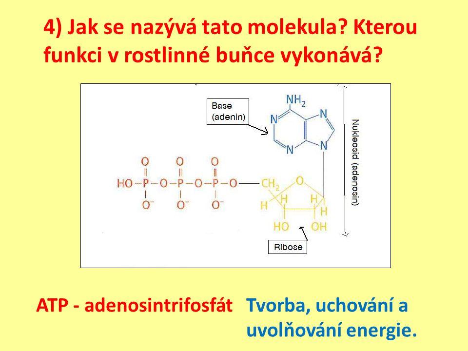 4) Jak se nazývá tato molekula. Kterou funkci v rostlinné buňce vykonává.