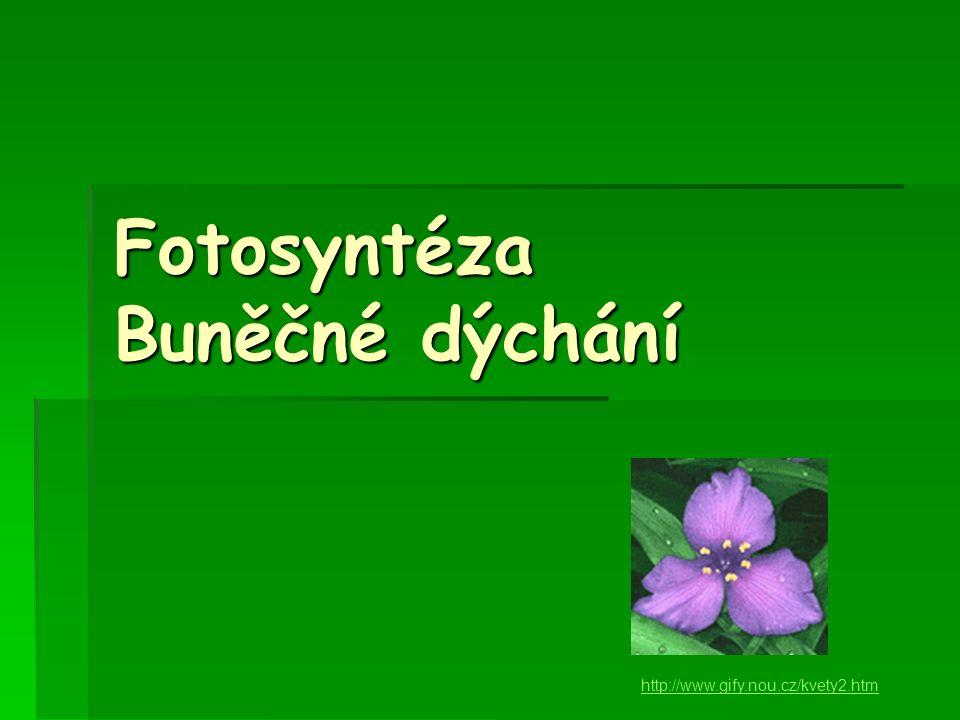 Fotosyntéza Buněčné dýchání http://www.gify.nou.cz/kvety2.htm