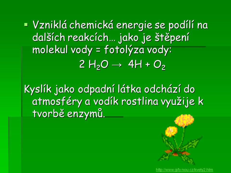  Vzniklá chemická energie se podílí na dalších reakcích… jako je štěpení molekul vody = fotolýza vody: 2 H 2 O → 4H + O 2 Kyslík jako odpadní látka odchází do atmosféry a vodík rostlina využije k tvorbě enzymů.