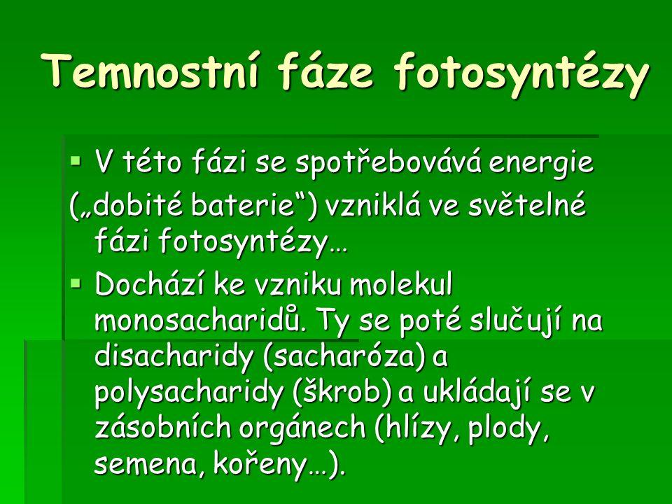 """Temnostní fáze fotosyntézy  V této fázi se spotřebovává energie (""""dobité baterie ) vzniklá ve světelné fázi fotosyntézy…  Dochází ke vzniku molekul monosacharidů."""
