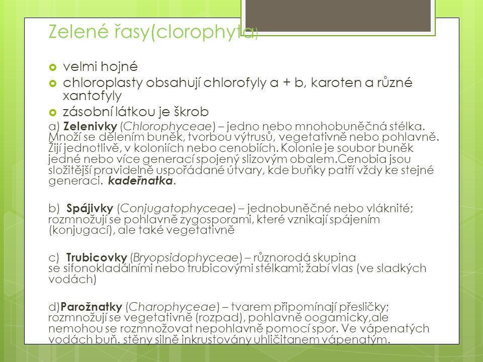 Zelené řasy(clorophyta )  velmi hojné  chloroplasty obsahují chlorofyly a + b, karoten a různé xantofyly  zásobní látkou je škrob a) Zelenivky (Chl