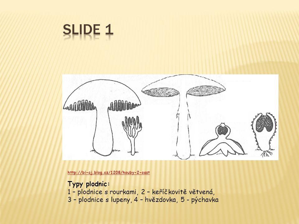 http://bi-cj.blog.cz/1208/houby-2-cast Typy plodnic: 1 – plodnice s rourkami, 2 – keříčkovitě větvená, 3 – plodnice s lupeny, 4 – hvězdovka, 5 - pýcha