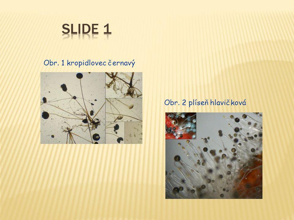 Třída hemiaskomycety  Výživa je saprofytická  Rozmnožování: nepohlavní (dělení, pučení) převládá  Typickým zástupcem jsou kvasinky (jsou jednobuněčné) – např.