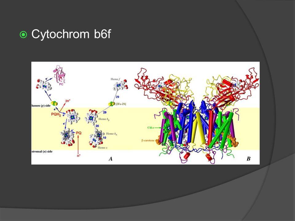  Cytochrom b6f