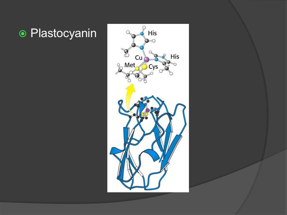 Plastocyanin