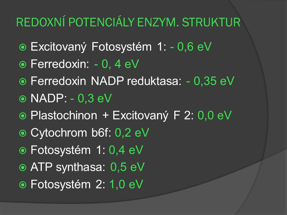 REDOXNÍ POTENCIÁLY ENZYM. STRUKTUR  Excitovaný Fotosystém 1: - 0,6 eV  Ferredoxin: - 0, 4 eV  Ferredoxin NADP reduktasa: - 0,35 eV  NADP: - 0,3 eV