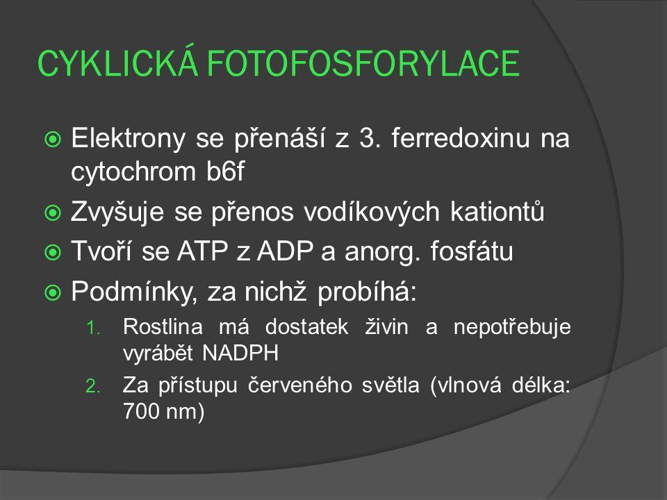 CYKLICKÁ FOTOFOSFORYLACE  Elektrony se přenáší z 3. ferredoxinu na cytochrom b6f  Zvyšuje se přenos vodíkových kationtů  Tvoří se ATP z ADP a anorg