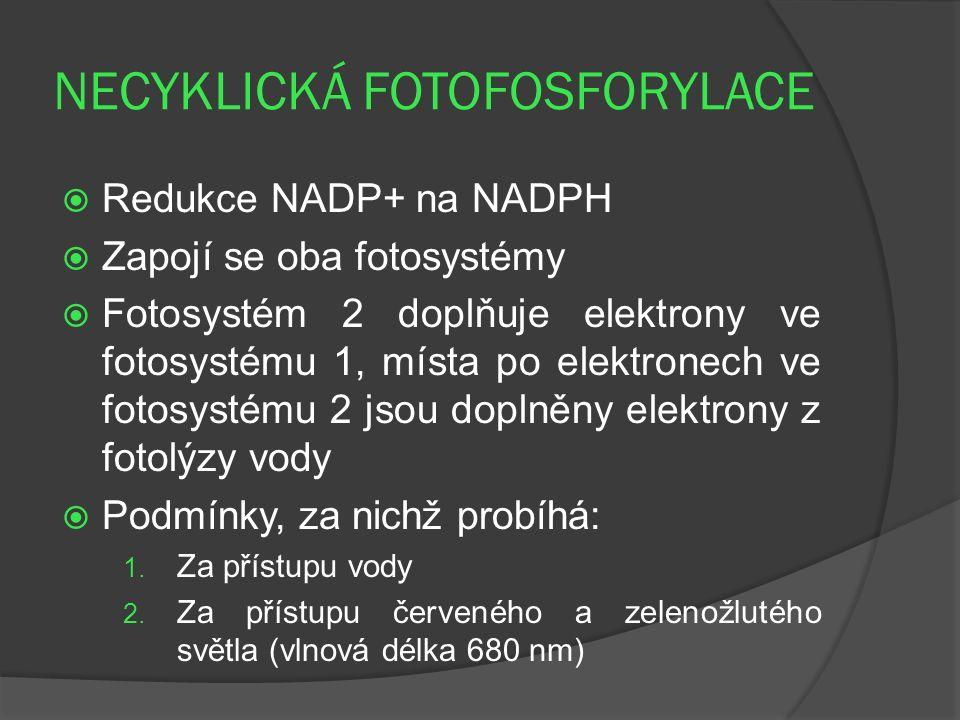 NECYKLICKÁ FOTOFOSFORYLACE  Redukce NADP+ na NADPH  Zapojí se oba fotosystémy  Fotosystém 2 doplňuje elektrony ve fotosystému 1, místa po elektronech ve fotosystému 2 jsou doplněny elektrony z fotolýzy vody  Podmínky, za nichž probíhá: 1.