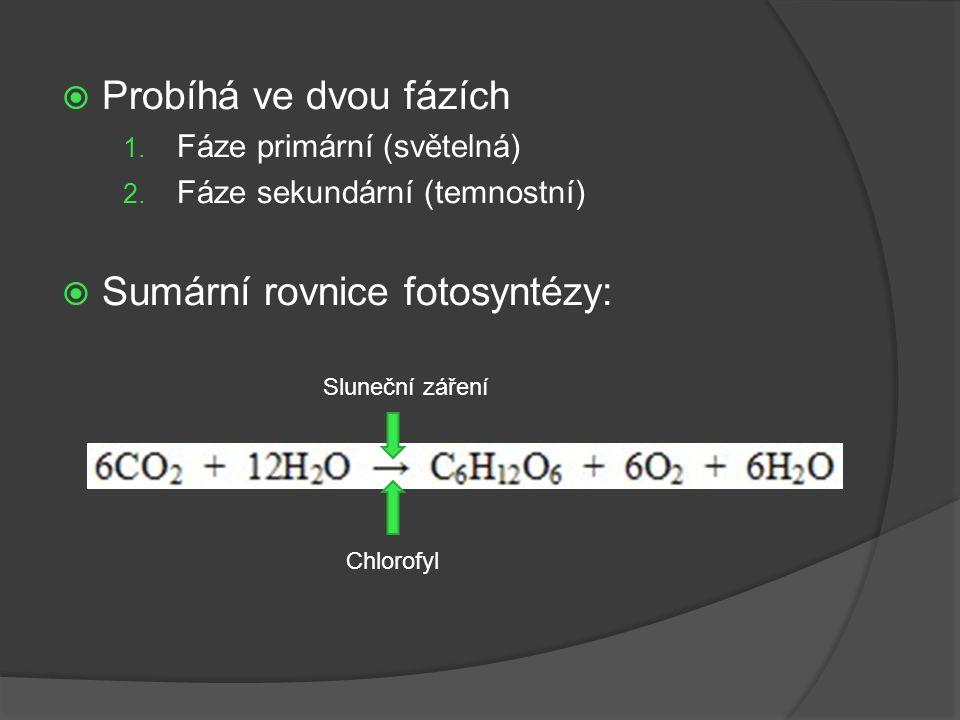  Probíhá ve dvou fázích 1. Fáze primární (světelná) 2. Fáze sekundární (temnostní)  Sumární rovnice fotosyntézy: Sluneční záření Chlorofyl