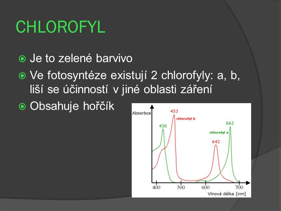CHLOROFYL  Je to zelené barvivo  Ve fotosyntéze existují 2 chlorofyly: a, b, liší se účinností v jiné oblasti záření  Obsahuje hořčík
