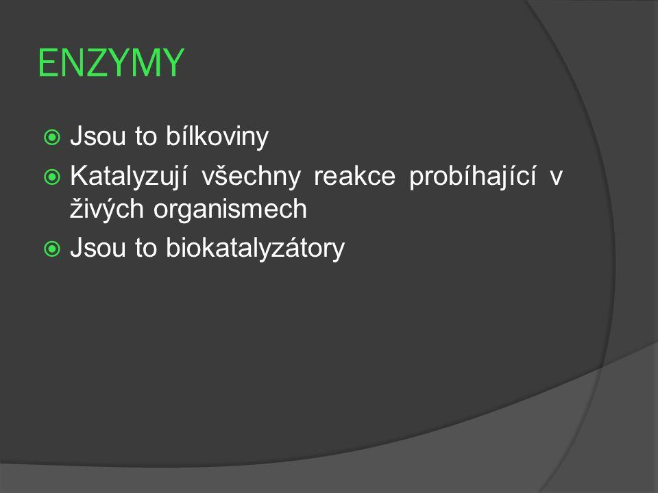 ENZYMY  Jsou to bílkoviny  Katalyzují všechny reakce probíhající v živých organismech  Jsou to biokatalyzátory
