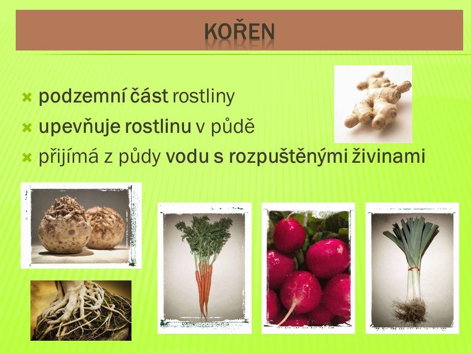  nadzemní část rostliny  vyrůstají z něj listy, květ a plod  vede vodu a rozpuštěné živiny z kořene do listů a dalších částí rostliny  umožňuje rostlině růst