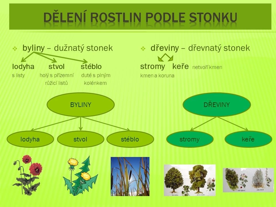  nadzemní část rostliny  vyrůstá ze stonku  probíhá v něm fotosyntéza díky zelenému barvivu  má plochou část čepel a úzkou část řapík, která spojuje čepel se stonkem  Listy mohou být jednoduché, nebo složené
