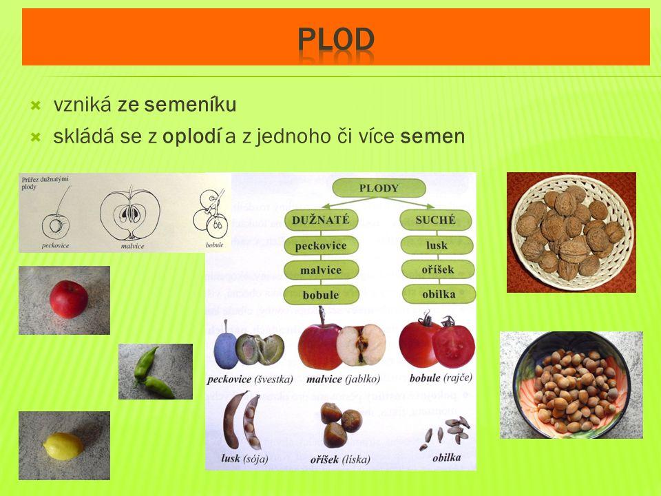  vzniká ze semeníku  skládá se z oplodí a z jednoho či více semen