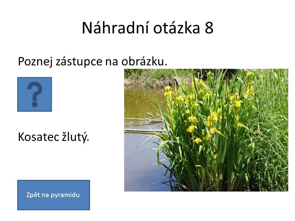 Náhradní otázka 8 Poznej zástupce na obrázku. Kosatec žlutý. Zpět na pyramidu