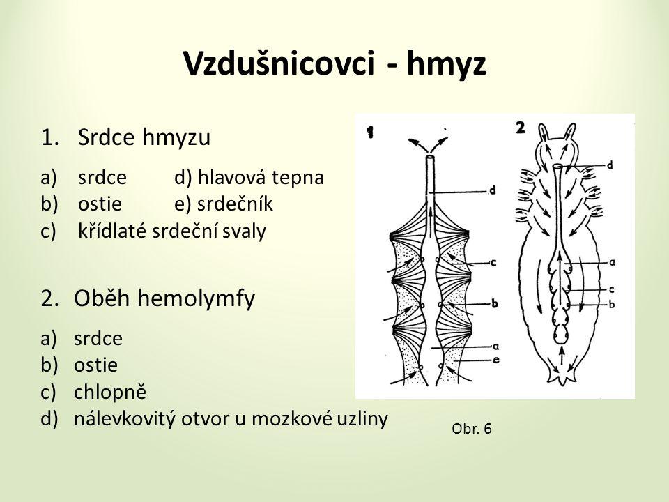 Vzdušnicovci - hmyz 1.Srdce hmyzu a)srdced) hlavová tepna b)ostiee) srdečník c)křídlaté srdeční svaly 2.Oběh hemolymfy a)srdce b)ostie c)chlopně d)nálevkovitý otvor u mozkové uzliny Obr.