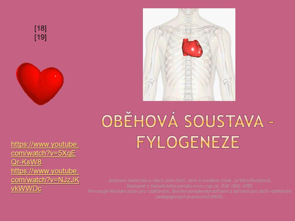  2 S + 2 K, oddělený plicní a tělní krevní oběh. Je zachován pouze levý oblouk aorty.